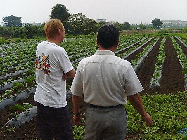 原農園サトイモと大谷さん飯川社長後姿.jpg