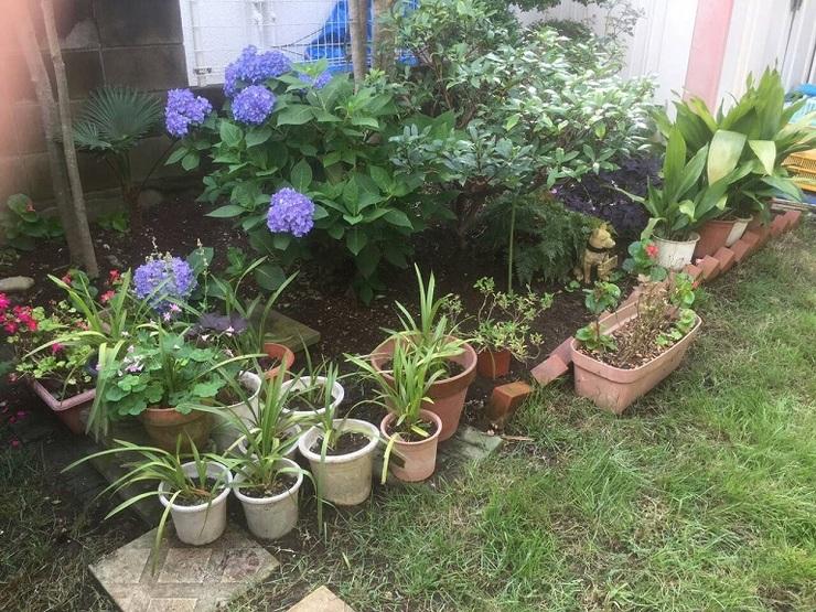 家庭菜園?小.jpg