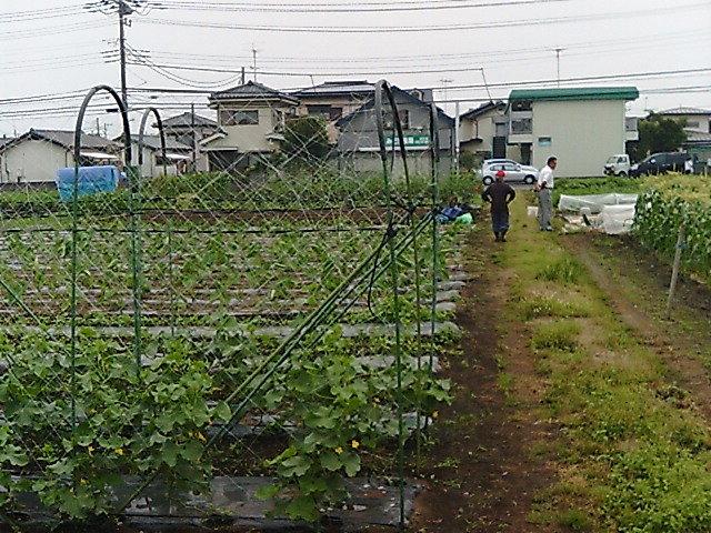 家庭菜園風景.JPG