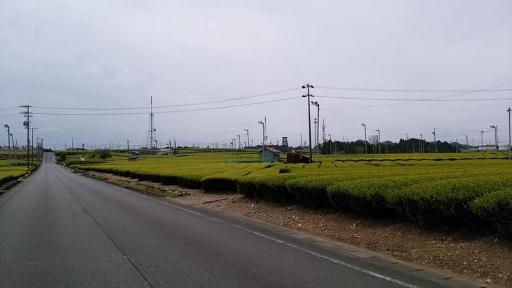 小・茶畑1.jpg