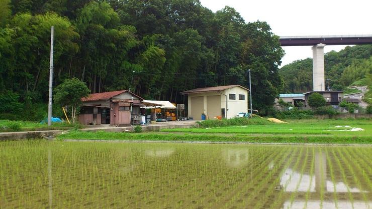 某 農園・田.jpg