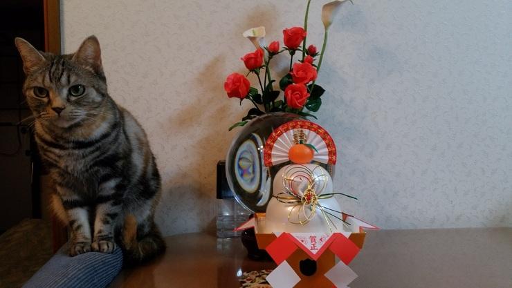正月ブログ・猫?.jpg