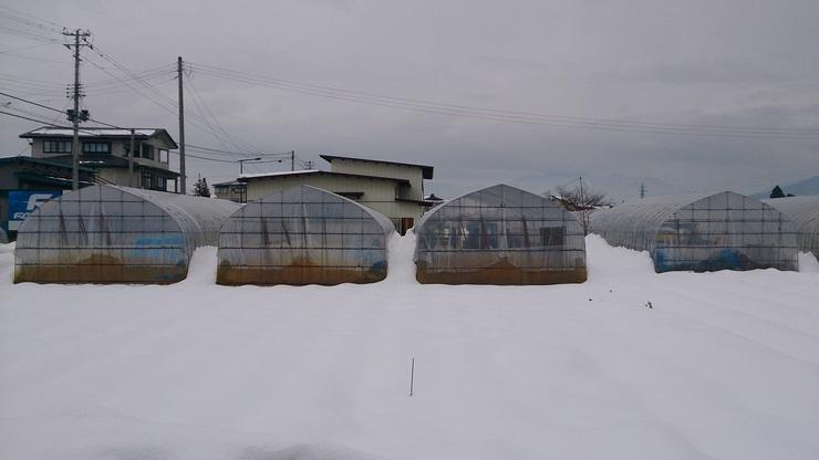 雪 ハウス.jpg