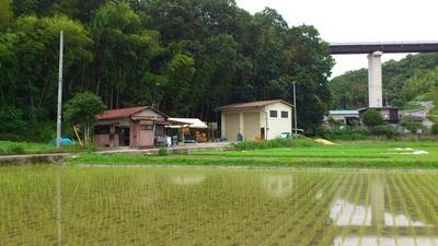 某 農園・田.jpgのサムネイル画像